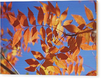 Arizona Fall 1 Wood Print by David Rizzo