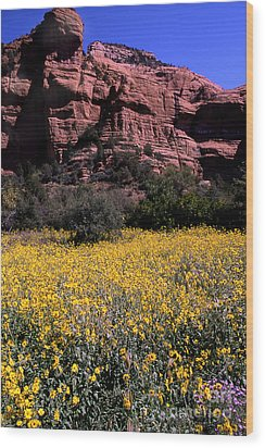 Arizona Flower Field Wood Print by Barry Shaffer