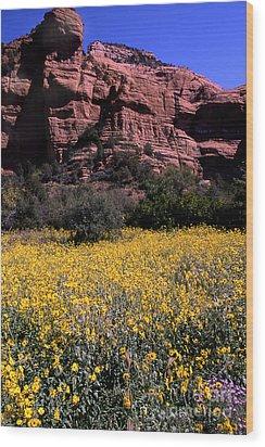 Arizona Flower Field Wood Print by Barry Shaffer