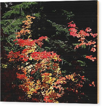 Arrival Of Autumn Wood Print by Nick Kloepping