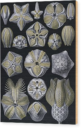Artforms Of Nature Wood Print by Ernst Haeckel