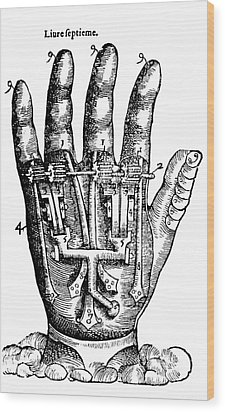 Artificial Hand Designed By Ambroise Wood Print by Science Source