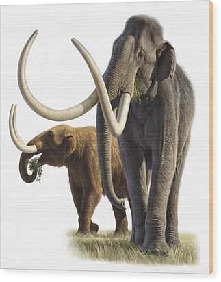 Artwork Of A Mammoth And A Mastodon Wood Print by Raul Martin