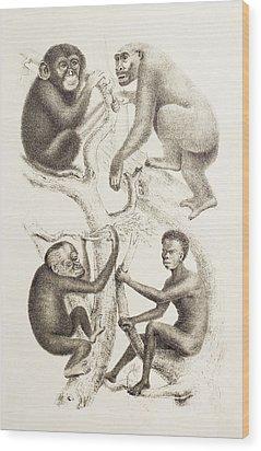 Artwork Of Four Apes, 1874 Wood Print by Mehau Kulyk