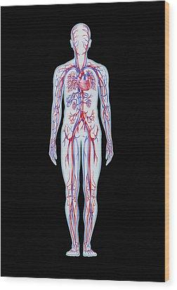 Artwork Of Human Blood Circulation Wood Print by John Bavosi