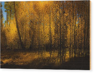 Wood Print featuring the photograph Aspen Glow by Randy Wood