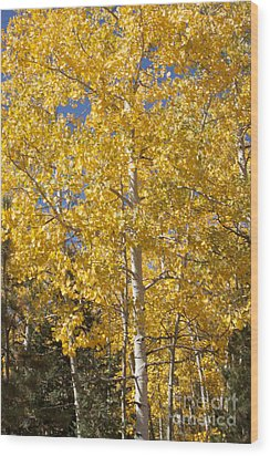 Wood Print featuring the photograph Aspen Gold by Marta Alfred