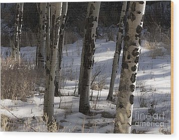 Wood Print featuring the photograph Aspen Grove by Angelique Olin