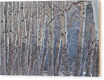 Aspen Grove Wood Print by Colleen Coccia