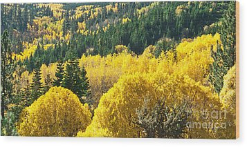 Aspen Hunt Wood Print