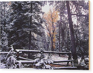 Aspen In Snow Wood Print by Barry Shaffer