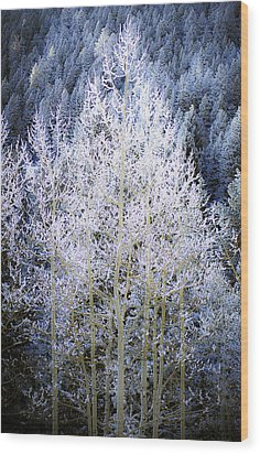 Aspen Lace Wood Print by Beth Riser