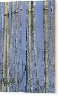 Aspen Poplar Trees Reflected In Spring Wood Print by Darwin Wiggett