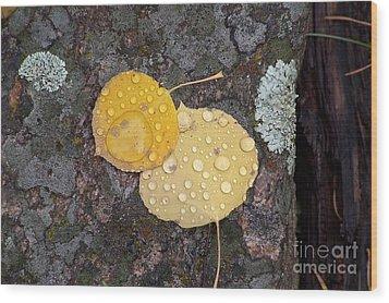 Aspen Tears Wood Print