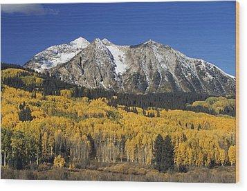 Aspen Trees In Autumn, Rocky Mountains Wood Print by David Ponton