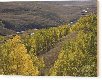 Aspen Valley Wood Print by Timothy Johnson