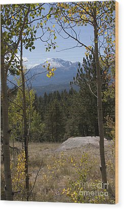 Wood Print featuring the photograph Aspens Around Pikes Peak by Marta Alfred