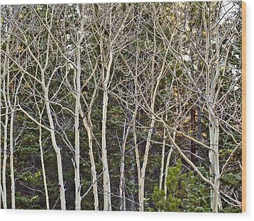 Aspens Color Gone Wood Print by Larry Darnell