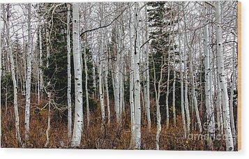 Aspens Wood Print by Robert Bales