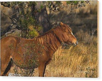 Assateague Wild Pony Wood Print