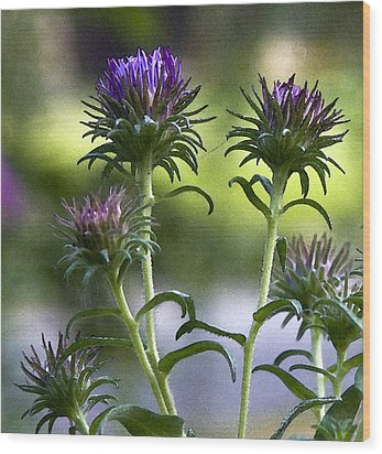 Wood Print featuring the photograph Asters by Michael Friedman