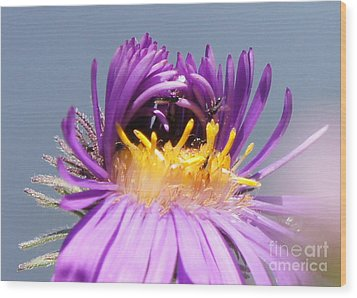 Asters Starting To Bloom Close-up Wood Print by Robert E Alter Reflections of Infinity