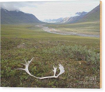 Atigun Valley Caribou Shed Wood Print by Adam Owen