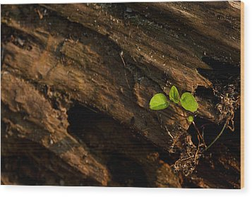 Atres 9 Wood Print by Karol Livote