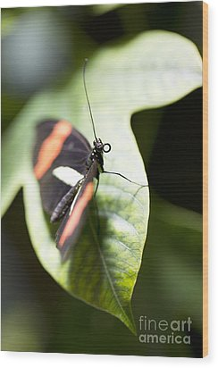 Wood Print featuring the photograph Attention by Leslie Leda