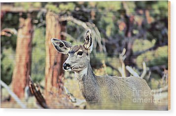 Wood Print featuring the photograph Attentive by Catherine Fenner