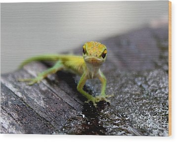 Attitudinous Anole Wood Print by Theresa Willingham