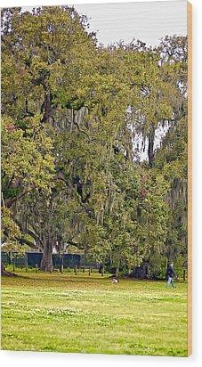 Audubon Park 2 Wood Print by Steve Harrington