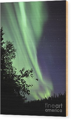 Aurora Borealis Above The Trees Wood Print by Jiri Hermann