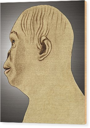 Australopithecus Reconstruction Wood Print by Sheila Terry