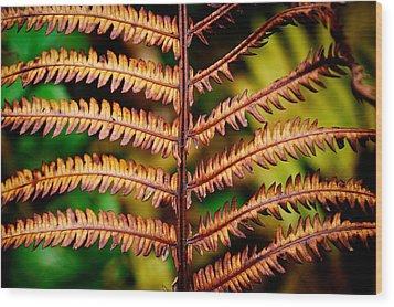 Autmn Fern Wood Print