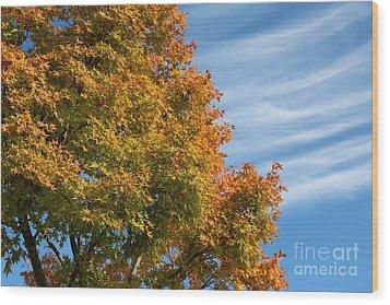 Autumn Anticipation Wood Print by Carol Groenen