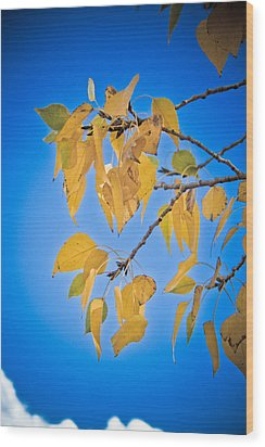 Autumn Aspen Leaves And Blue Sky Wood Print by James BO  Insogna