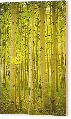 Autumn Aspens Vertical Image  Wood Print by James BO  Insogna