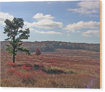 Wood Print featuring the photograph Autumn At The Meadow by Shirin Shahram Badie