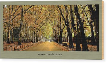 Autumn Avenue Wood Print by Liona Toussaint