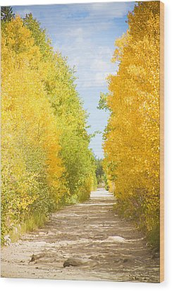 Autumn Back County Road Wood Print by James BO  Insogna