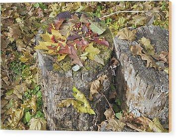 Autumn Berries And Leaves  Wood Print by Aleksandr Volkov