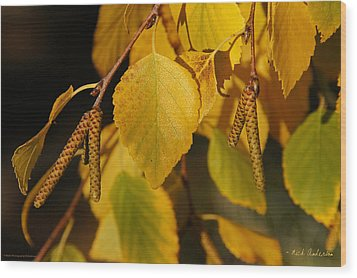 Wood Print featuring the photograph Autumn Birch In Southern Oregon by Mick Anderson