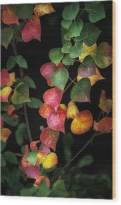 Autumn Color Wood Print by Brenda Bryant