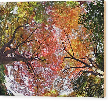 Autumn Color Wood Print by Shuya Seno Photography