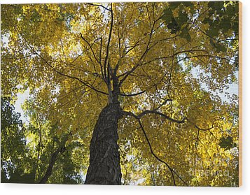 Autumn Colors Wood Print by Darleen Stry