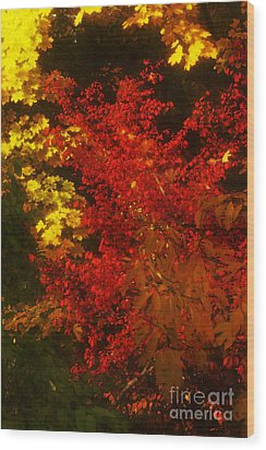 Autumn Colors Wood Print by Jeff Breiman