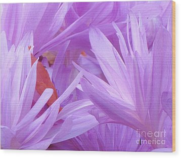 Wood Print featuring the photograph Autumn Crocus by Michele Penner
