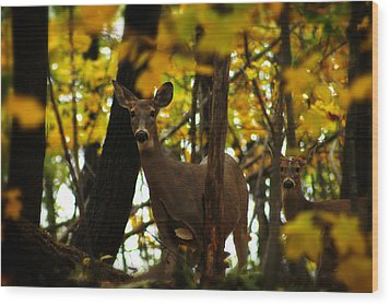 Autumn Doe Wood Print by Scott Hovind