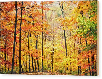 Wood Print featuring the photograph Autumn Forest by Randall Branham
